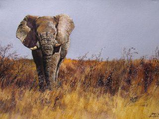 Old Tusker, Etosha Pan - W76cm X H51cm R13,500